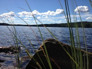 Schweden_VW_T5_California_Camping_Juli_August - Wildcamping_Seegras