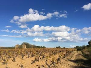 VW T5 California Camping Frankreich November - Pyrenäen Lézignan Wein Corbières Carcassonne Weinberg Weingut