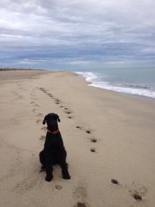VW T5 California Edition Camping Frankreich November - Mittelmeer Riesenschnauzer Hund Kueste Strand