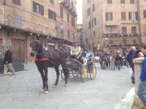 VW_T5_ California_Camping_Italien_Reisetipps_Bericht_Siena_Pferd_Kutsche_Piazza Del Campo