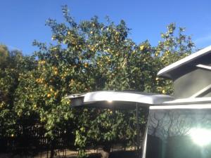 VW-T5-California-Camping-Italien-Reisetipps-Bericht-Zitronen-Campingplatz-Finale-Ligure