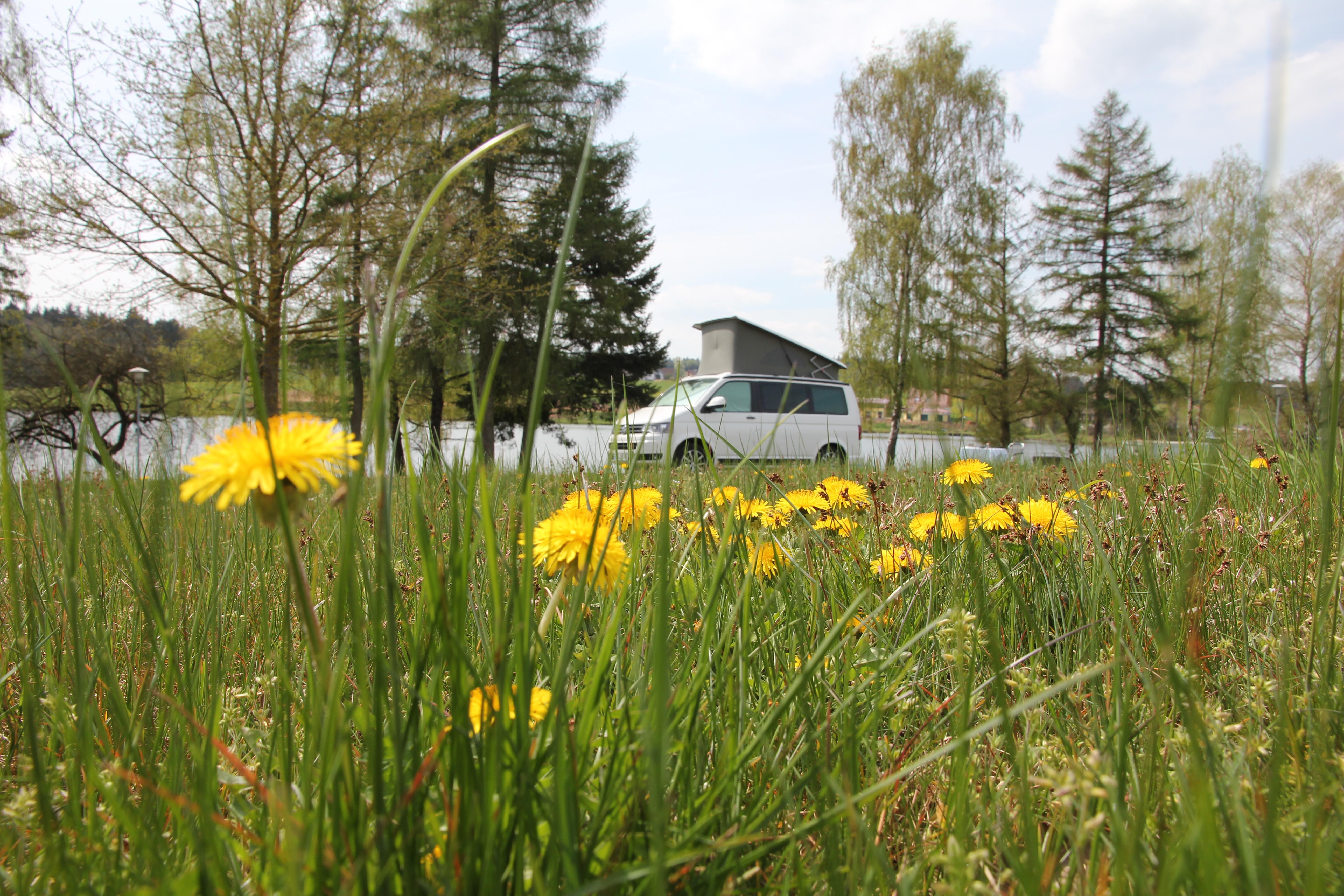 VW T5 California Frühling Sommer Löwenzahn See Campingplatz Wiese Hammerschmiedesee Aalen Abtsgmünd