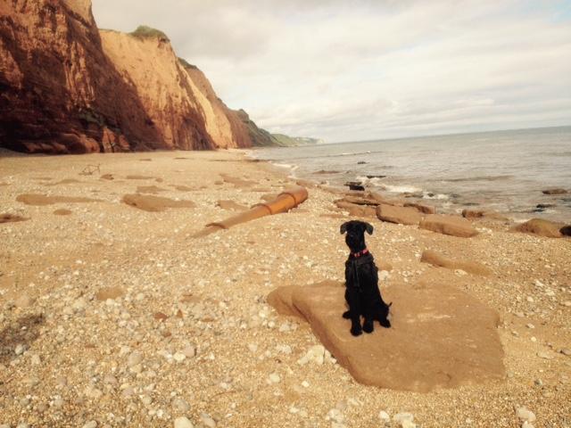 Tipps zur Einreise mit Hund nach Großbritannien