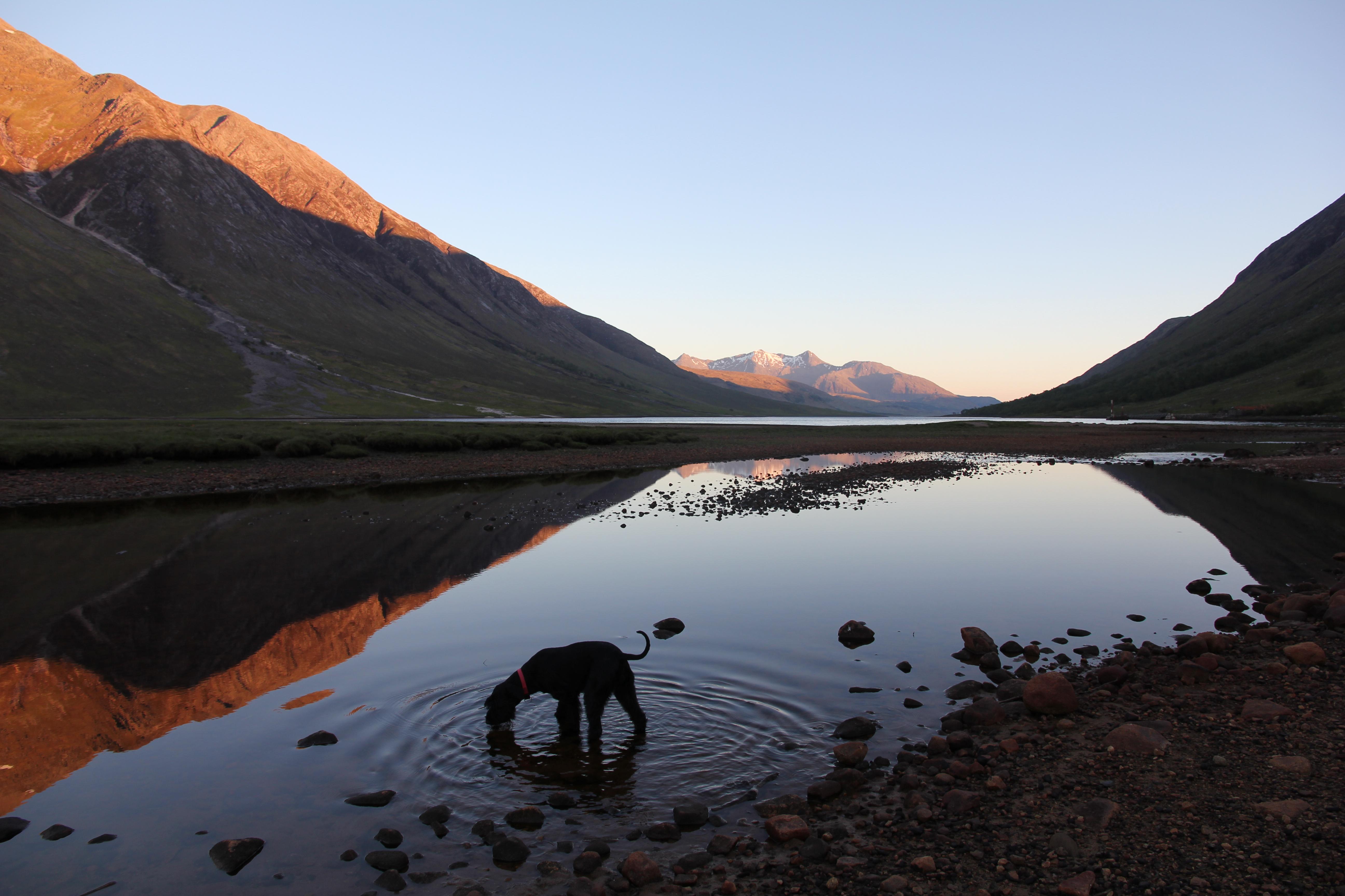 VW T5 T6 California Schottland Roadtrip 2015 Wildcamping Glen Etive Abendstimmung Hund Wasser See